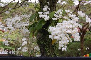 蘭の花!!